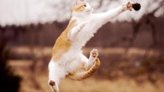 Animals blurred background cats jumping wallpaper