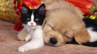 Animals cats cubs dogs friendship Wallpaper