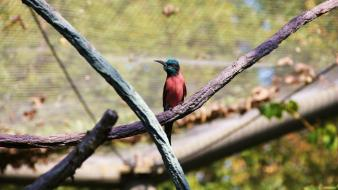 Birds bee eaters painted bunting wallpaper
