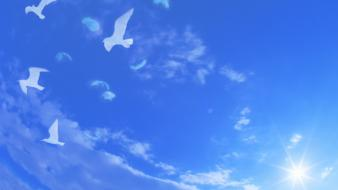 Birds skies Wallpaper
