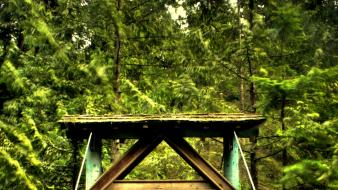Forests bridges canada british columbia park wallpaper