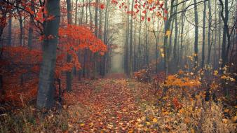 Grass paths fog autumn leaves early morning Wallpaper