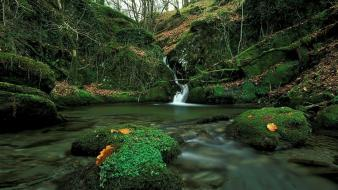 Landscapes nature trees moss waterfalls creek crystal wallpaper