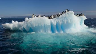 Water ocean nature penguins icebergs wallpaper
