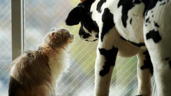 Animals cats cows stuffed toys wallpaper