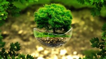 Bonsai tree digital art nature plants wallpaper