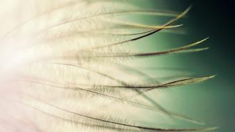 Close-up feathers macro depth of field gradient background wallpaper