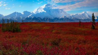 Denali national park landscapes mountains Wallpaper