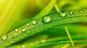 Dew grass macro water drops wallpaper
