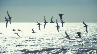Flying birds waves bokeh sunlight sea wallpaper