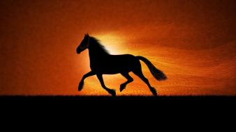Horse running sunset wallpaper