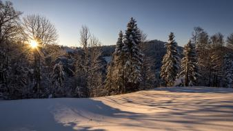 Morning sun switzerland forests landscapes natural scenery wallpaper