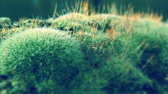 Nature moss macro photo shoot wallpaper