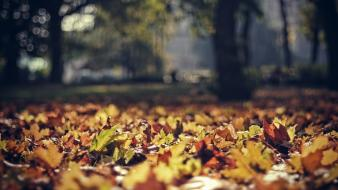 Nature trees autumn leaves bokeh depth of field wallpaper