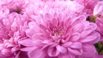 Purple flower photography wallpaper