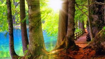 Summer shore branches rays shine lovely forest wallpaper
