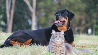 Animals cats dogs wallpaper