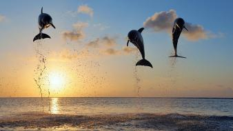 Animals islands dolphins bay sealife wallpaper