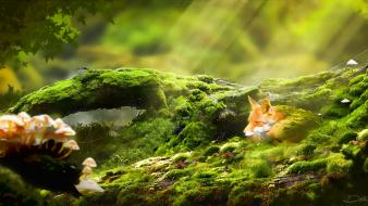 Animals mushrooms sunlight moss digital art foxes Wallpaper
