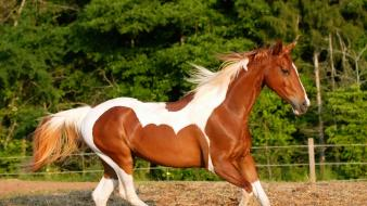 Beautiful horse pictures wallpaper