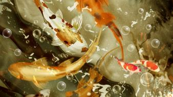 Bubbles koi fishes wallpaper