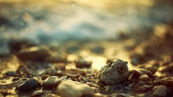 Depth of field seashells stones wallpaper