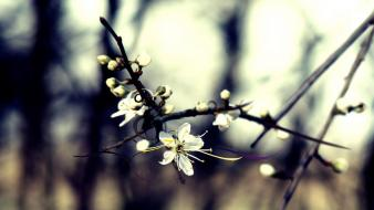 Flora blurred background branches depth of field flowers wallpaper