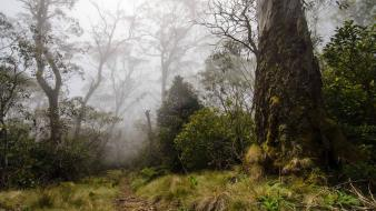 Forests grass fog plants australia national park wallpaper