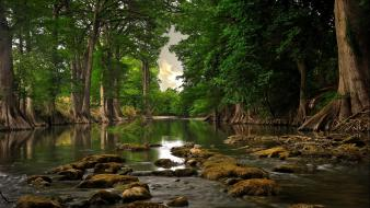 Forests green nature outdoors rivers wallpaper