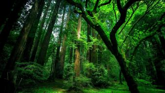 Green forest view wallpaper
