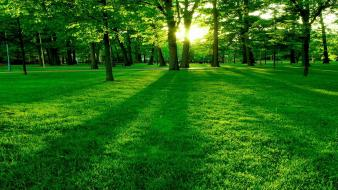 Green nature beautiful wallpaper