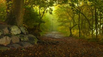 Nature trees forests paths fog autumn leaves Wallpaper