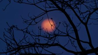 Night moon silhouettes depth of field branches wallpaper