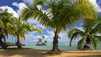 Palm grass hawaii tropical parks oahu beach wallpaper