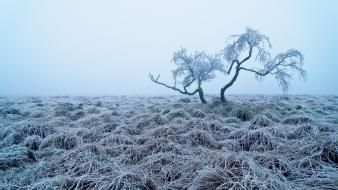 Trees fog mist frost hoarfrost lone tree Wallpaper
