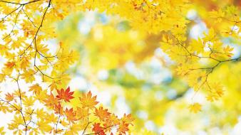 Yellow autumn leaves wallpaper