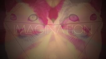 Acid cats imagination trip wallpaper