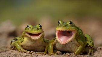 Animals close-up frogs laughing smiling wallpaper