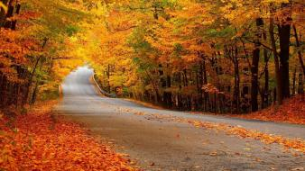 Autumn forests landscapes nature roads wallpaper