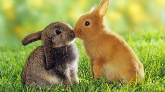 Cute rabbit pictures wallpaper