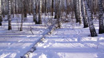 Forests land landscapes nature snow Wallpaper