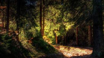 Forests landscapes nature pine trees sunlight Wallpaper