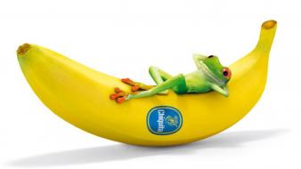 Fruits frogs bananas colors strong fresh vitamins wallpaper