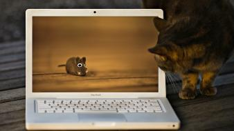 Funny cat and laptop wallpaper