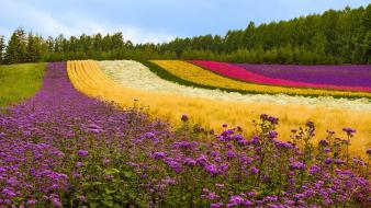 Japan colors flowers landscapes multicolor wallpaper