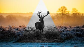 Landscapes deer triangle wallpaper
