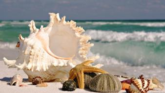 Nature shells starfish seashells marine sea Wallpaper