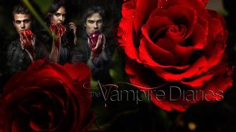 Paul wesley stefan salvatore damon red rose wallpaper