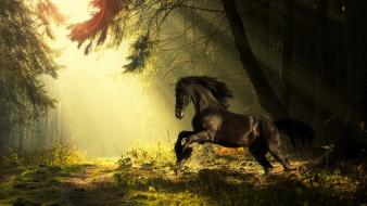 Sun summer horses forest Wallpaper