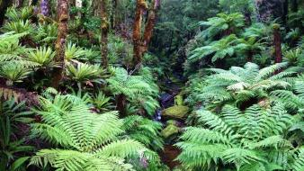Trees forests brown plants moss rainforest creek Wallpaper